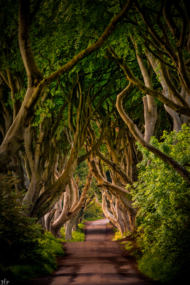 Dark Hedges by Gian Franco Prozzillo
