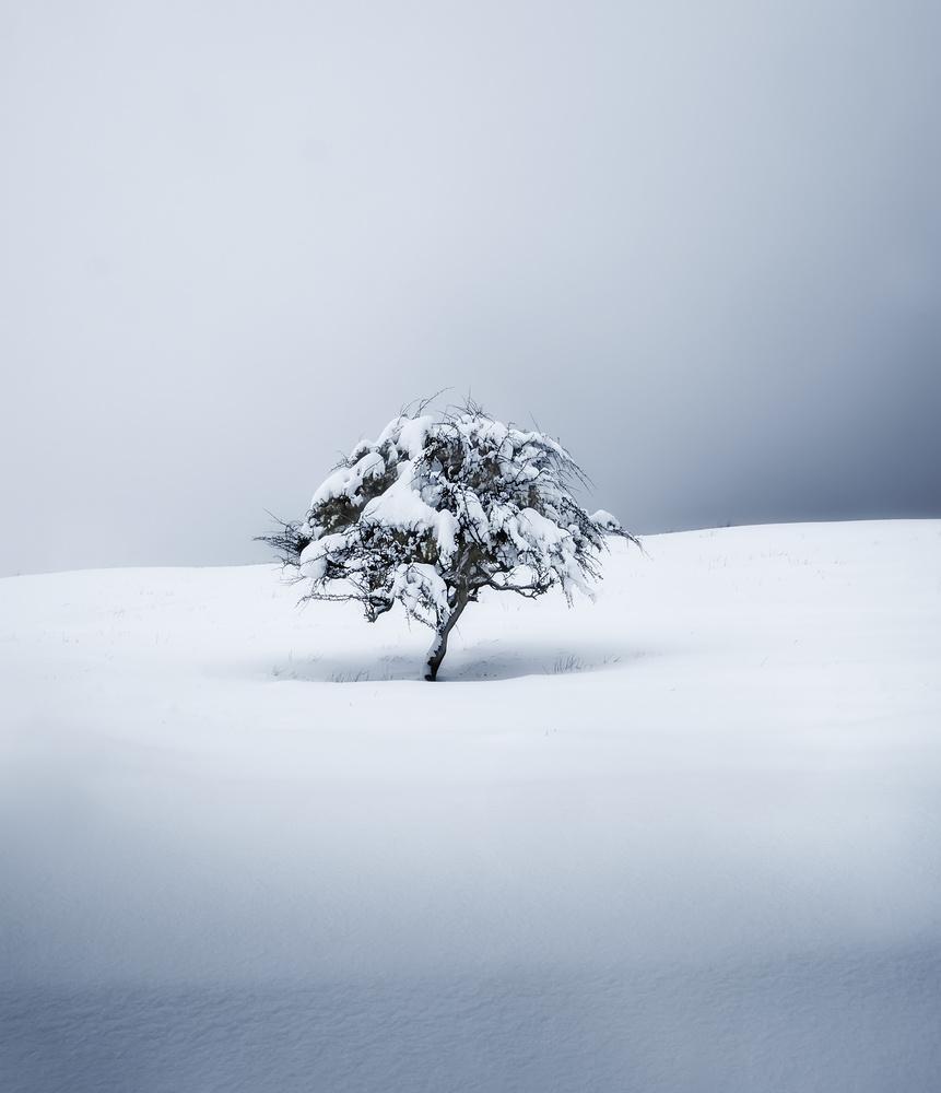 Alone by Aritz Atela