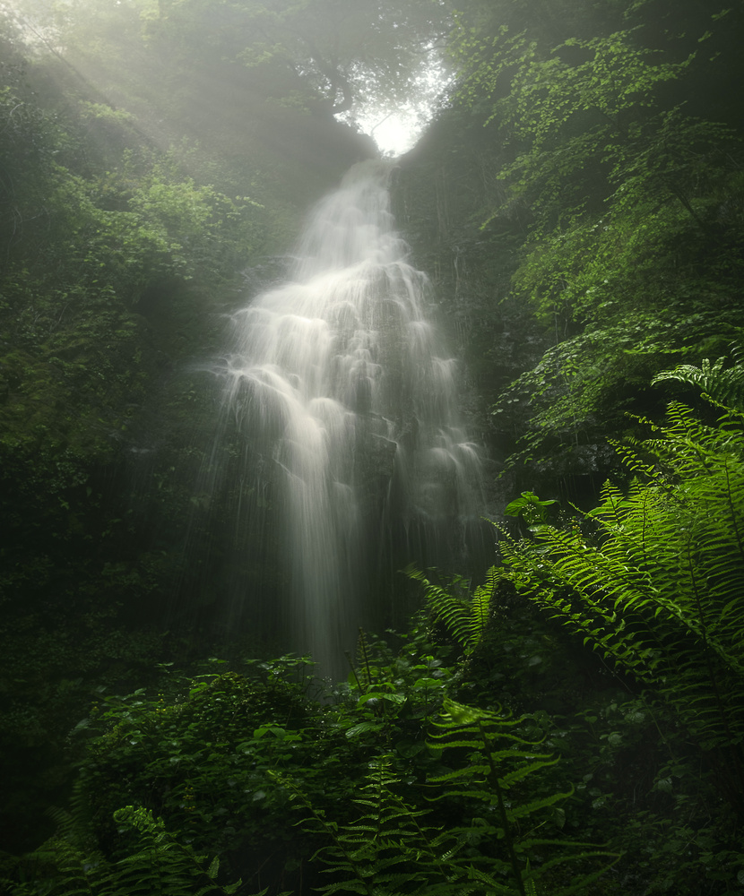 Deep in the Rainforest by Aritz Atela