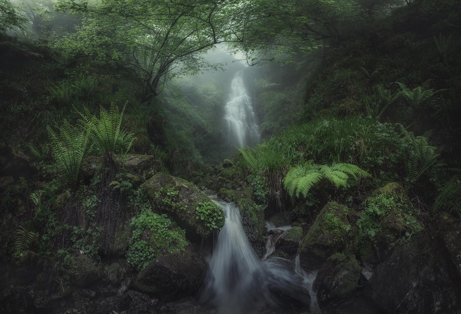 Dreamy Rainforest Panorama by Aritz Atela