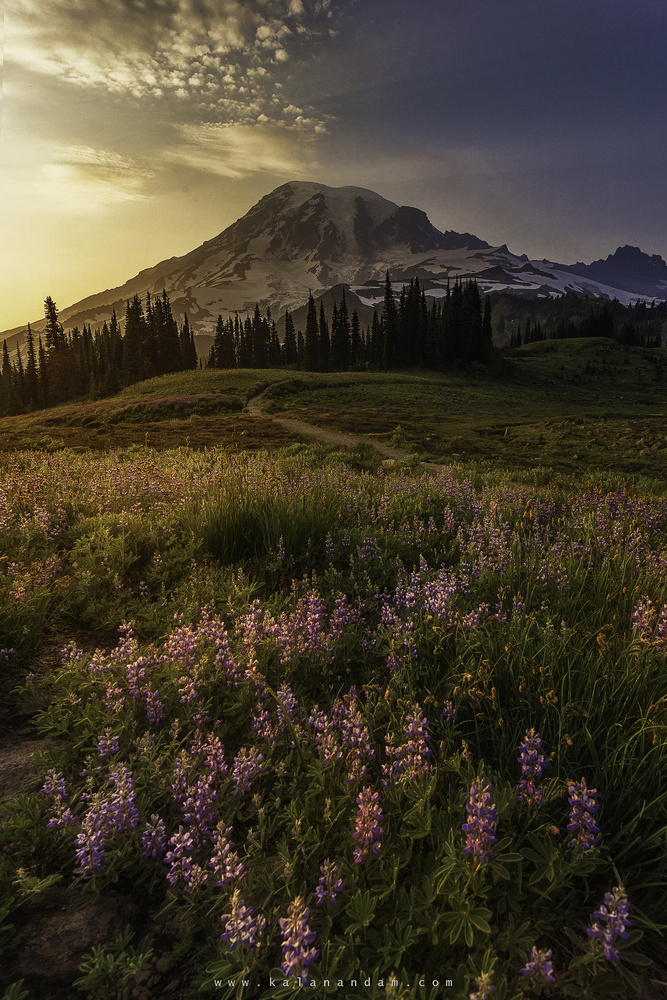 MtRainier Sunset by Anand Goteti