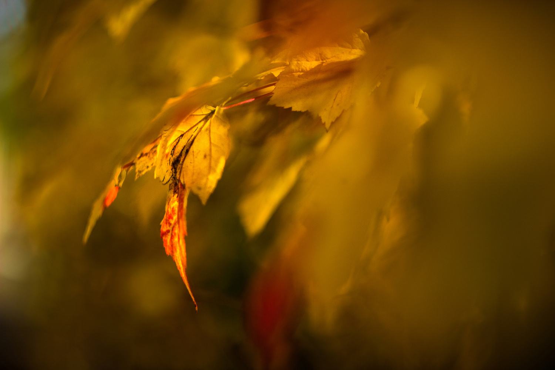 Enchanting Autumn by Ioan Pan