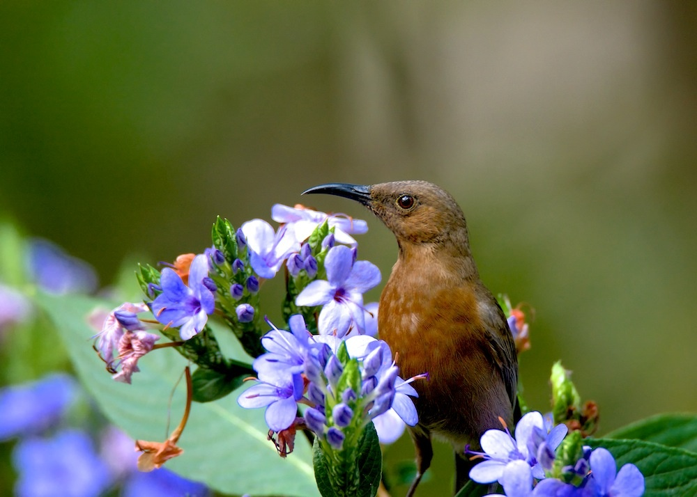 Smelling the flowers by Brad Cooper