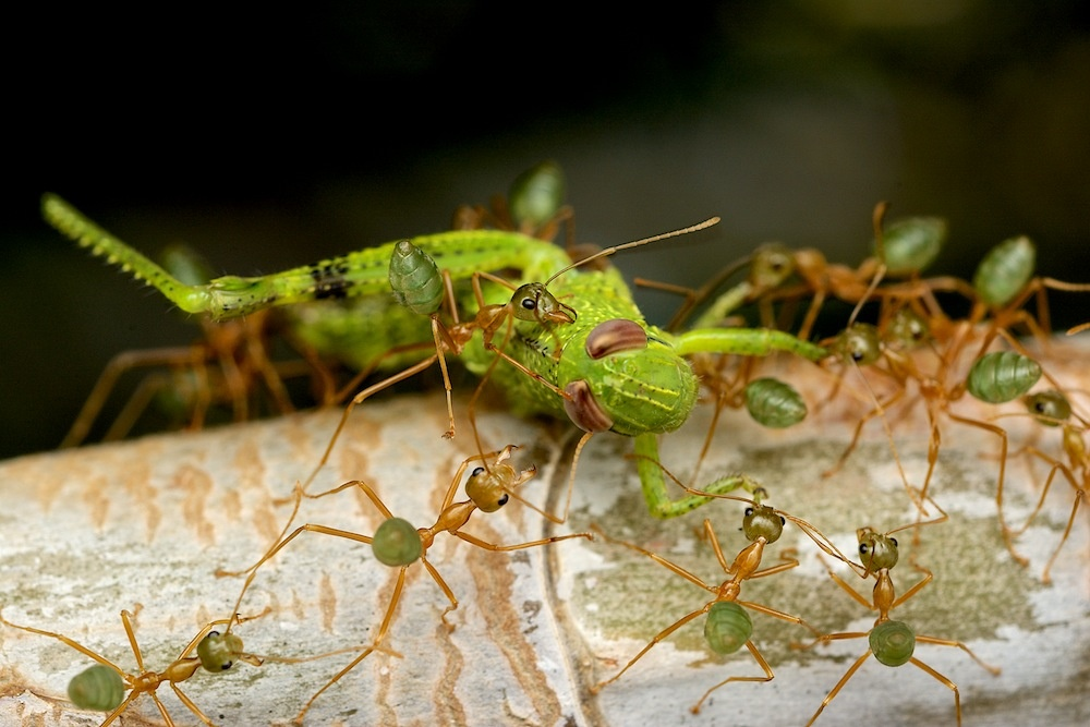 Greenants vs Grasshopper by Brad Cooper