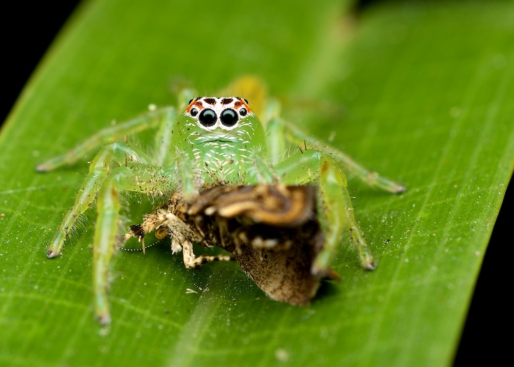 Mopsus Morman at lunctime by Brad Cooper