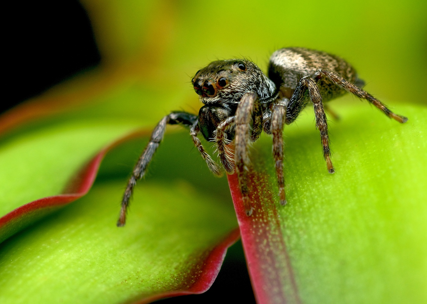 Prowling Jumper by Brad Cooper