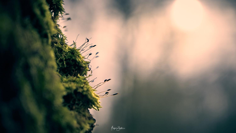 LIFE by Benjamin ZIEGLER