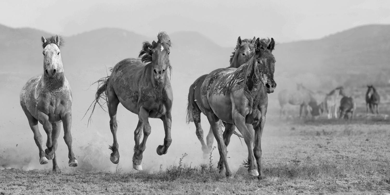 The Muddy Marauders by Paul Martin