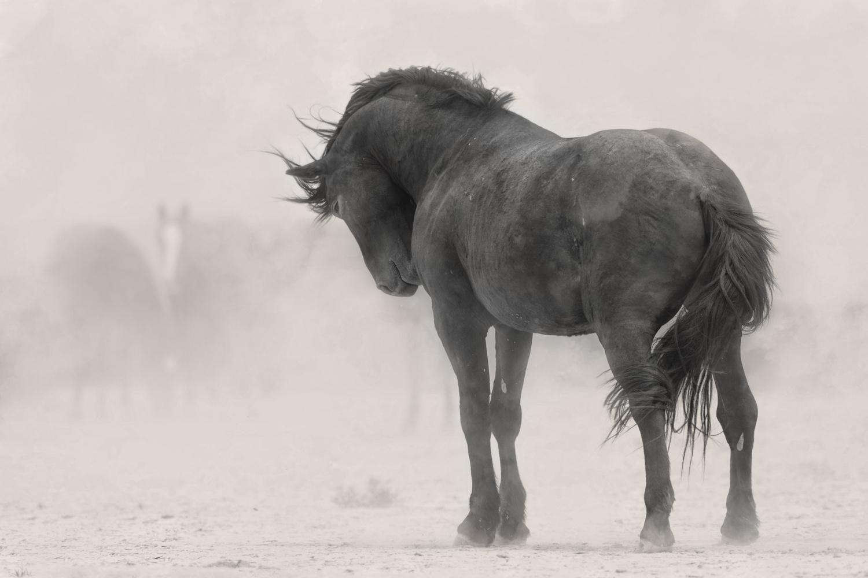 Stoic Stallion by Paul Martin