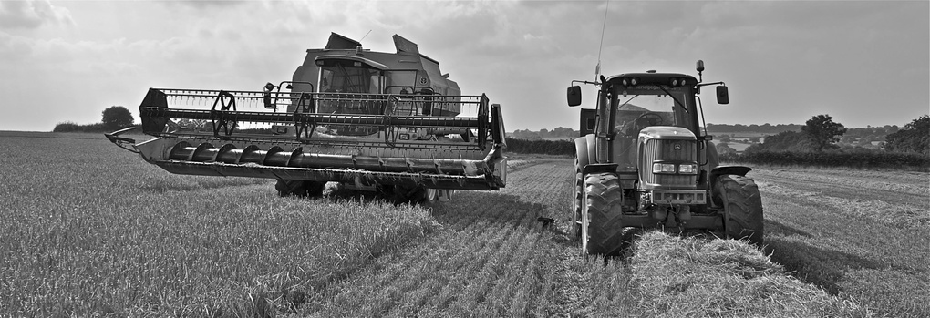 Harvest team by Beau Banks