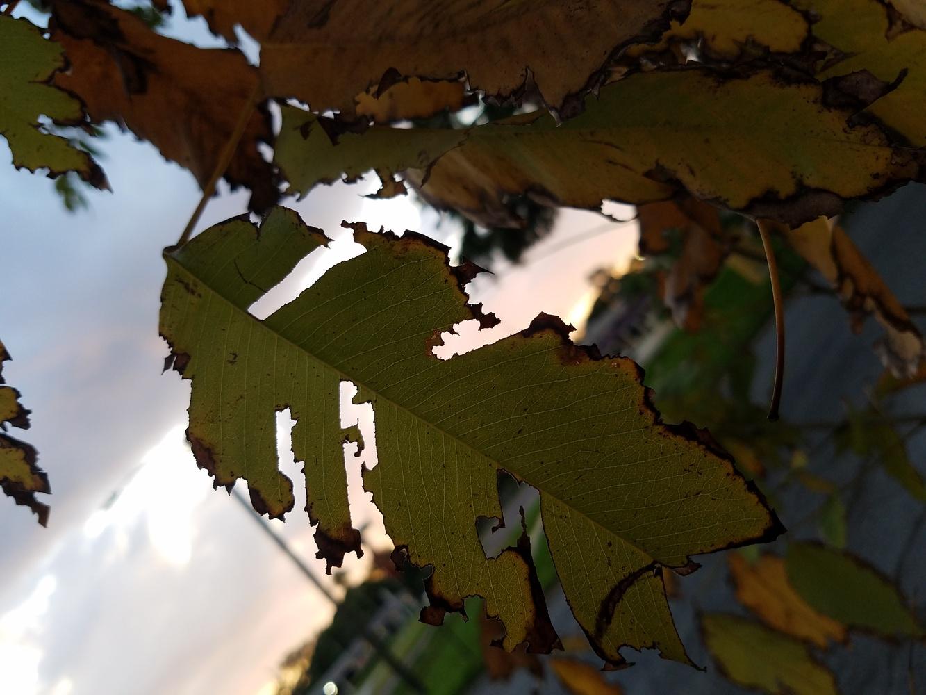 leaves by Heather Joyce