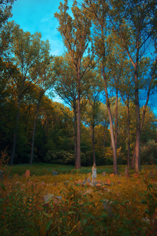 Mystical Forest by Jaroslav Stehlik