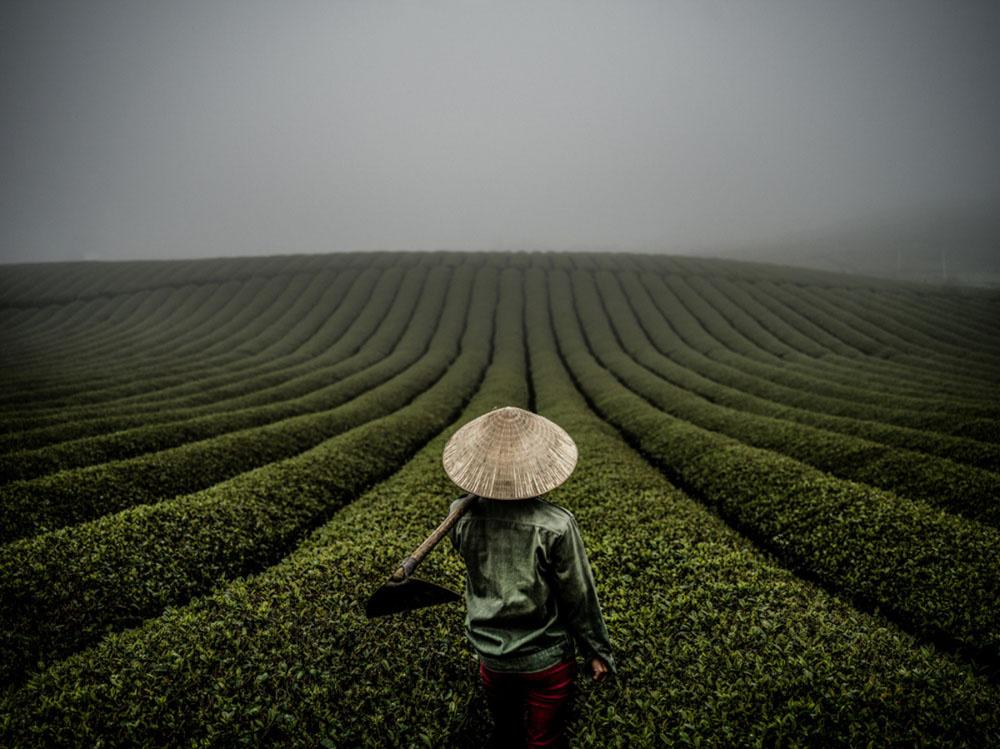 Vietnamese Tea Farmer  by Justin Mott