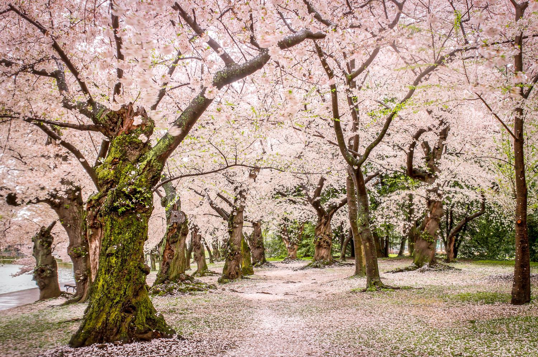 Yoshino Forest by Pedro Blanco