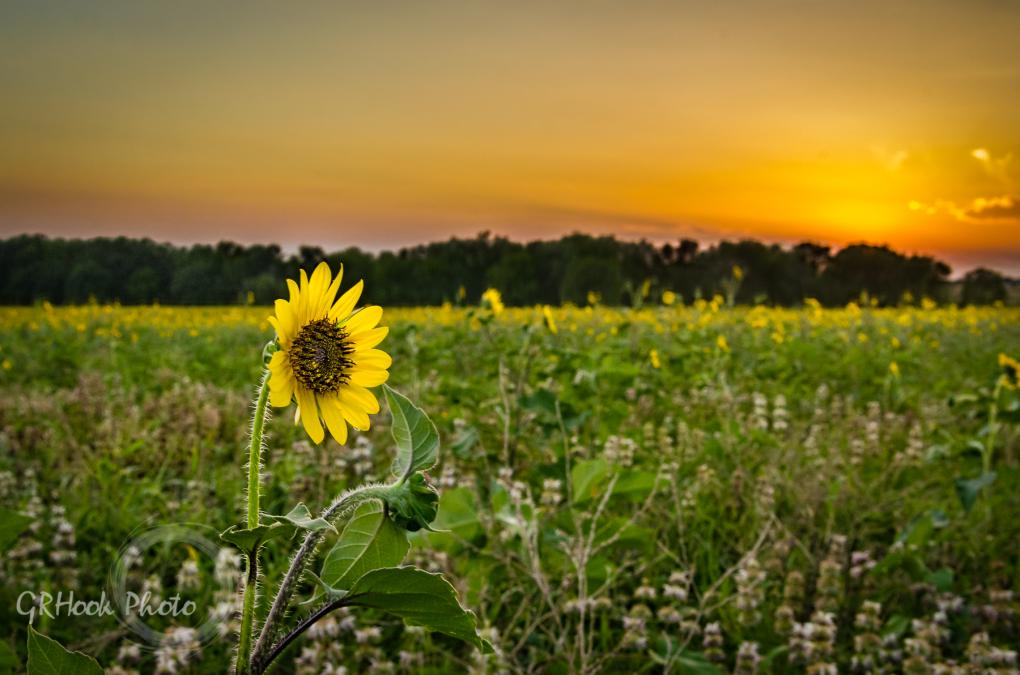 Outstanding in the Field by Gary Hook