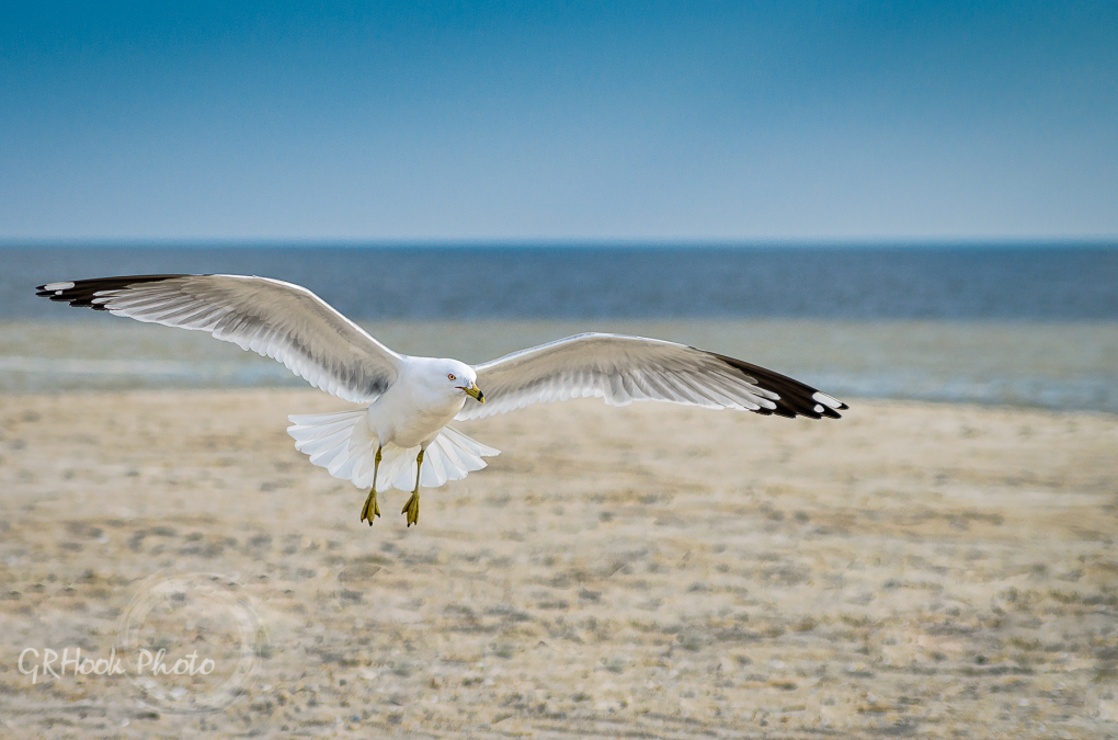 On a Jersey Shore by Gary Hook