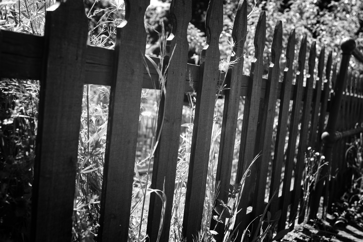 Fenced by J Michael Morelli