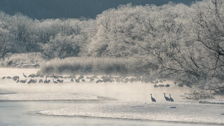Red-crowned Crane by Hiroshi Tanita