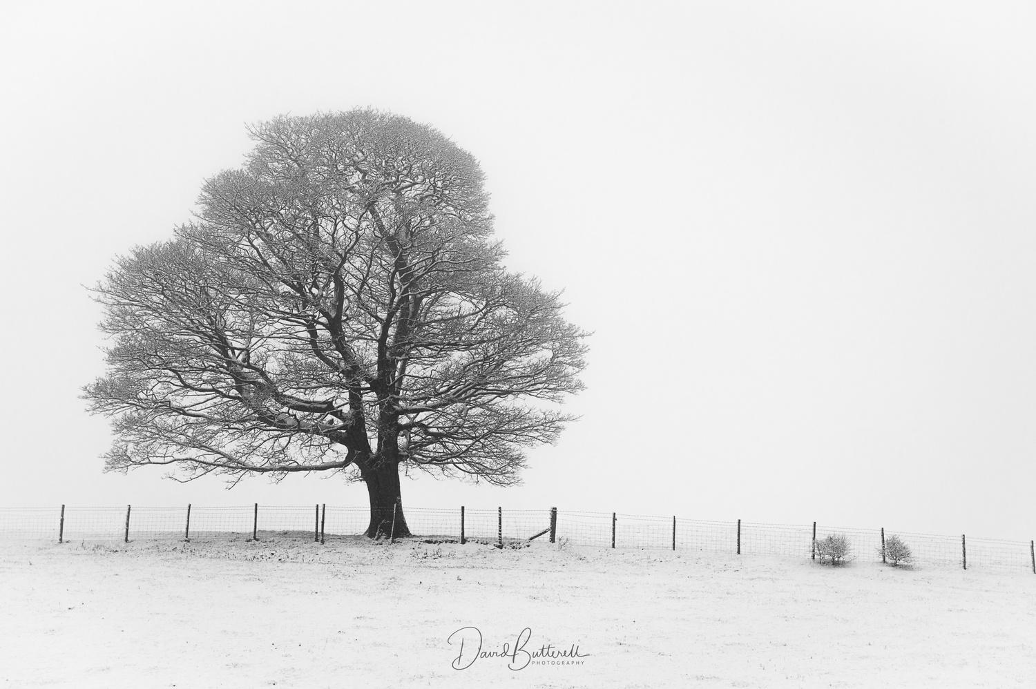 Snow Tree by David Butterell