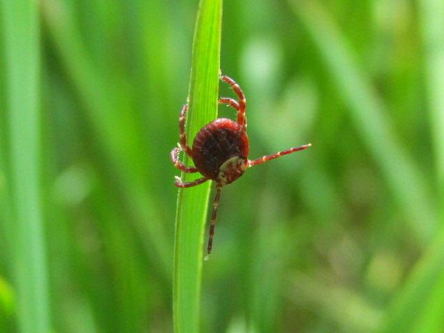 Tick on Grass by Keegan Doughty