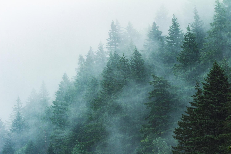 Misty  Mountains by Brandon Slames