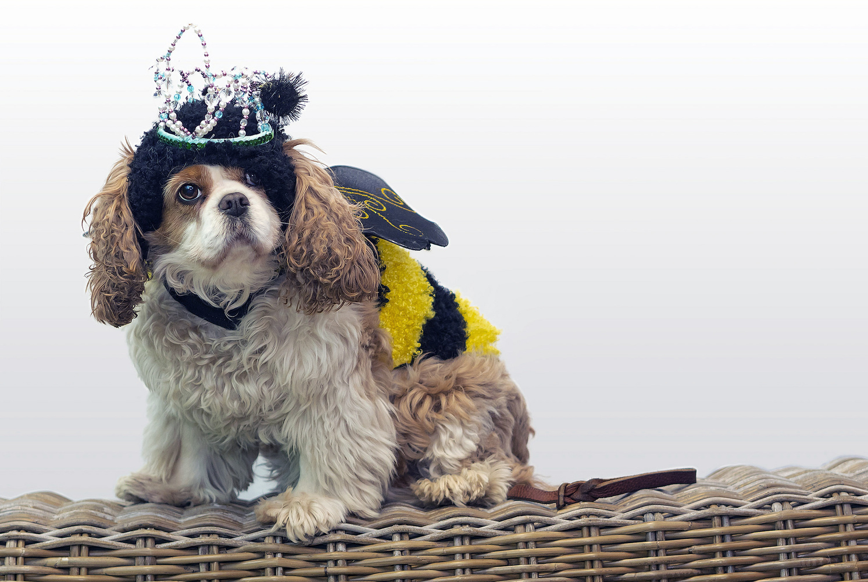 Queen Bee by John Pszeniczny