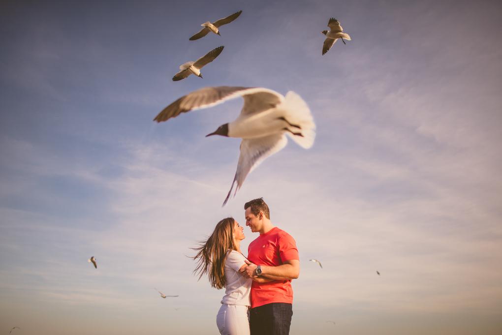 seagulls by Ian Sbalcio