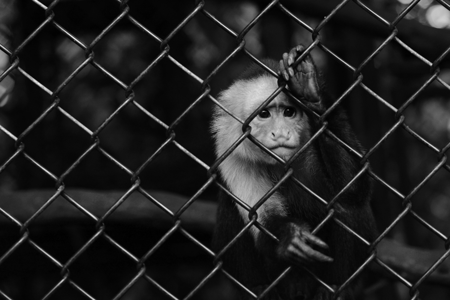Monkey Sees, Monkey Can't Do by Adriana Avello