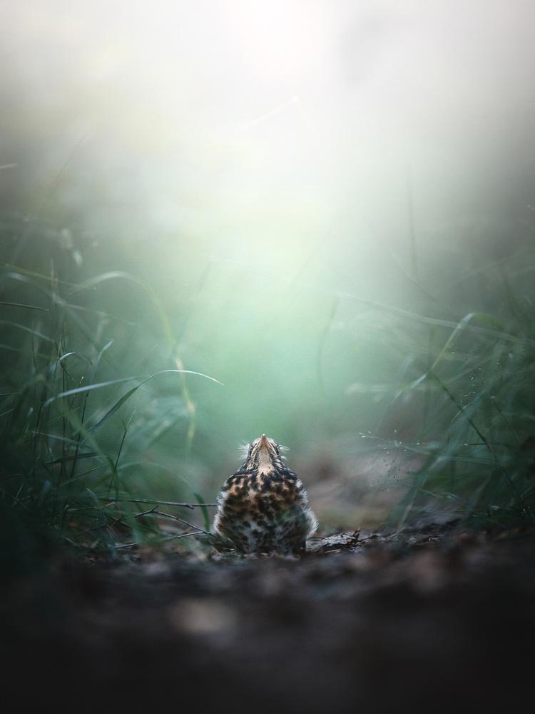 Little Bird by William Faucher