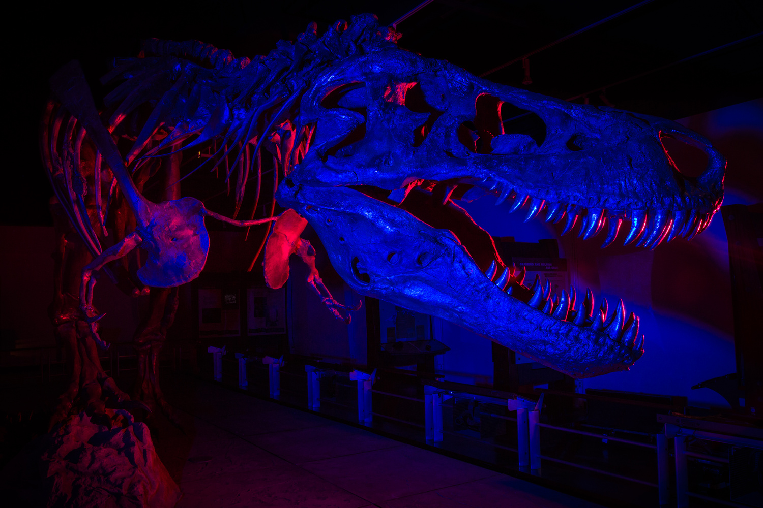 A T-Rex Named Sue by Peter Bumbarger
