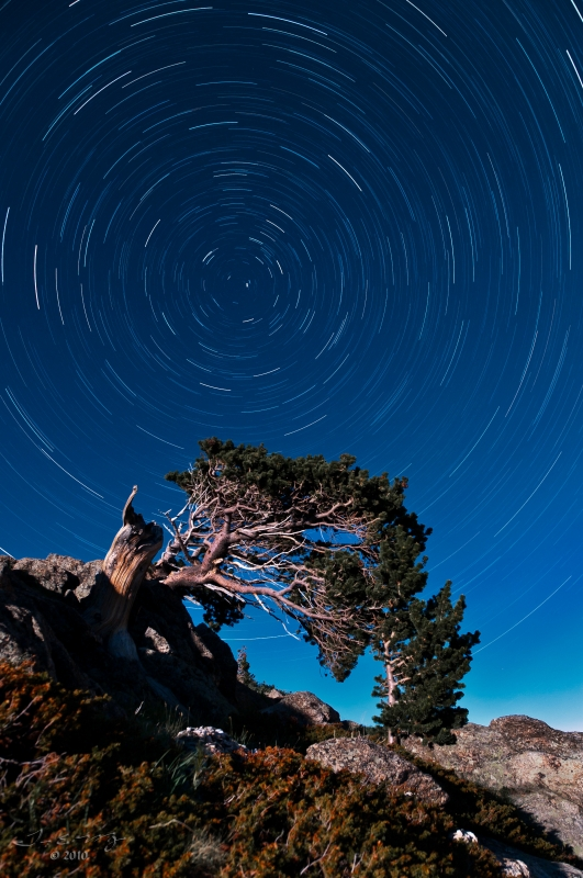 Bristlecone Star Trails by Tim Murray
