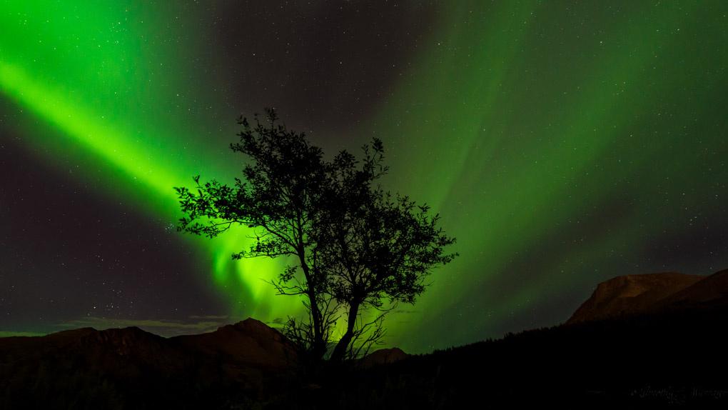 Auroral Tree by Tim Murray