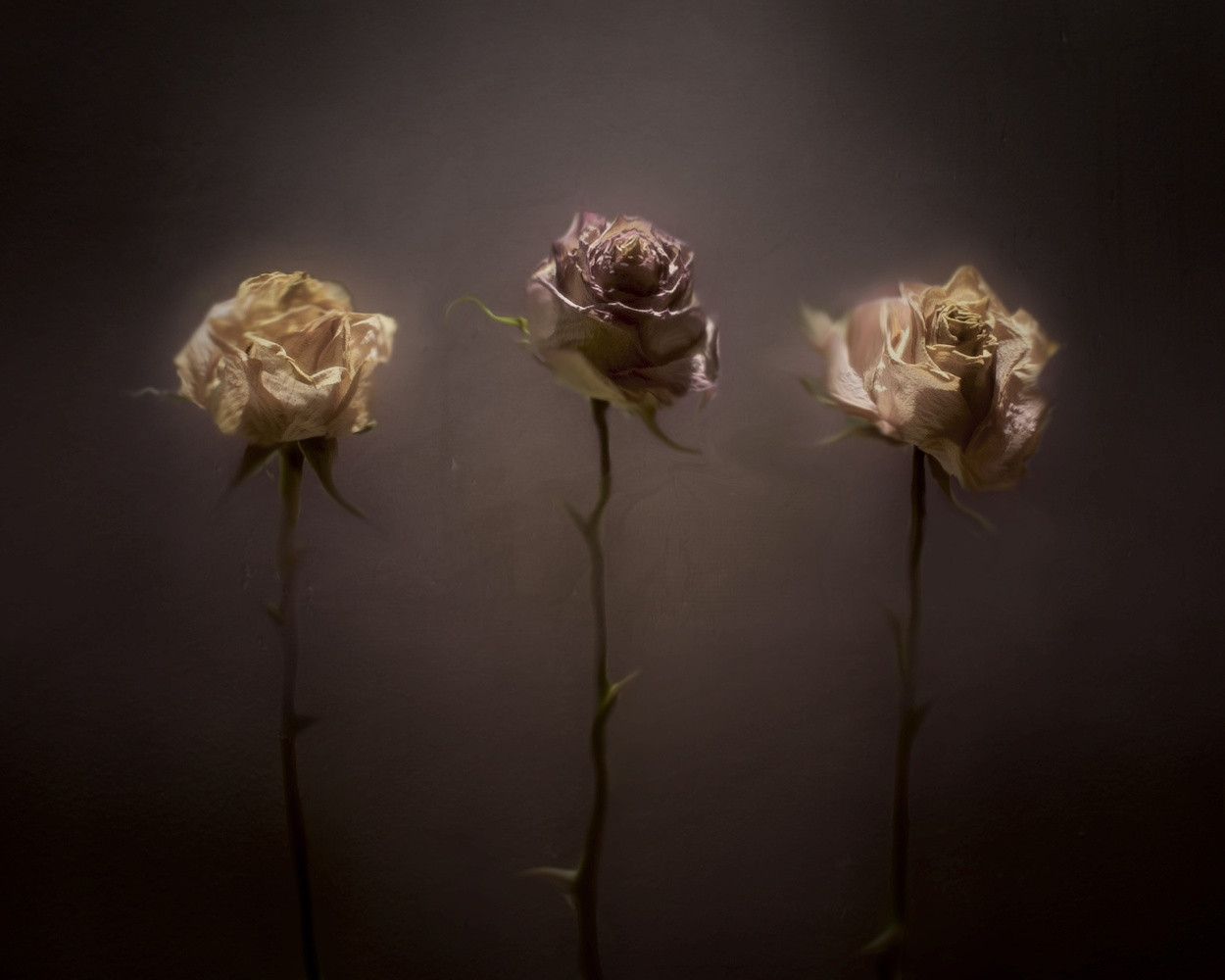 3 Dead Roses by Jamie Holland