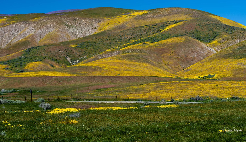 Carizo Plain Superbloom by Robert Grenader