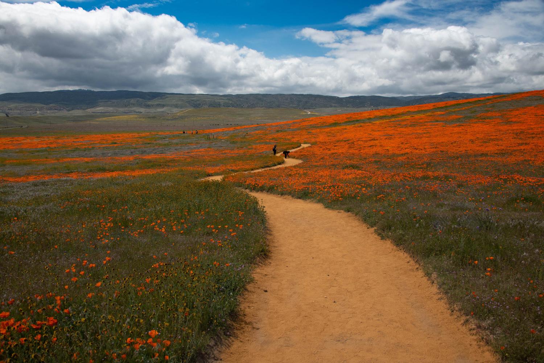 Follow the Yellow Brick Road by Robert Grenader