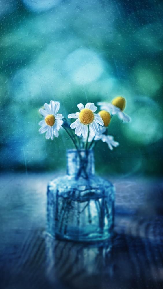 Flower by Mateusz Anioł