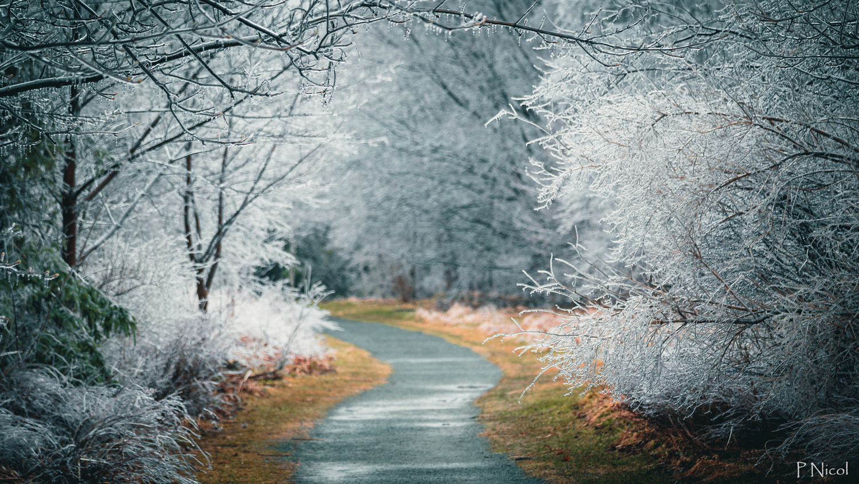 Silver Thaw by Paul Nicol