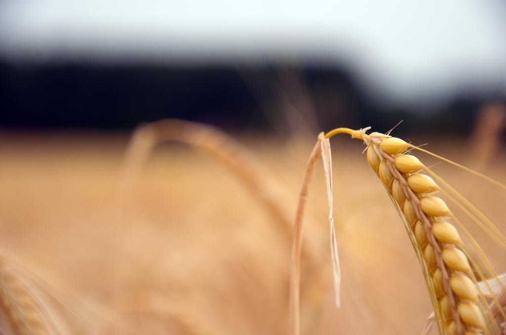 Grain by Christoph Moosbrugger