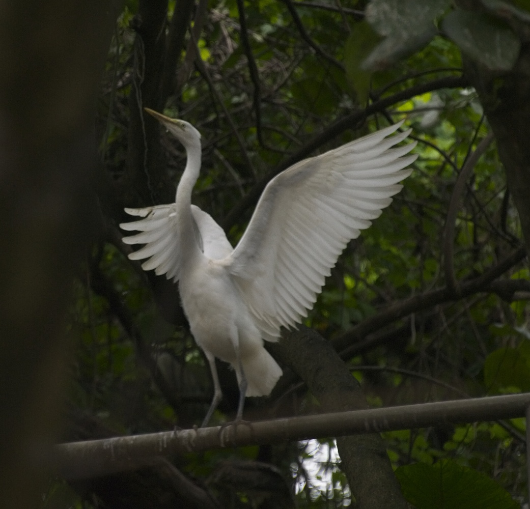Egret by Professor Une