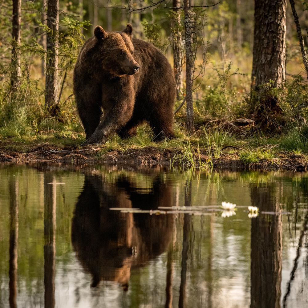 Mr. Bear by Annelin Hoff
