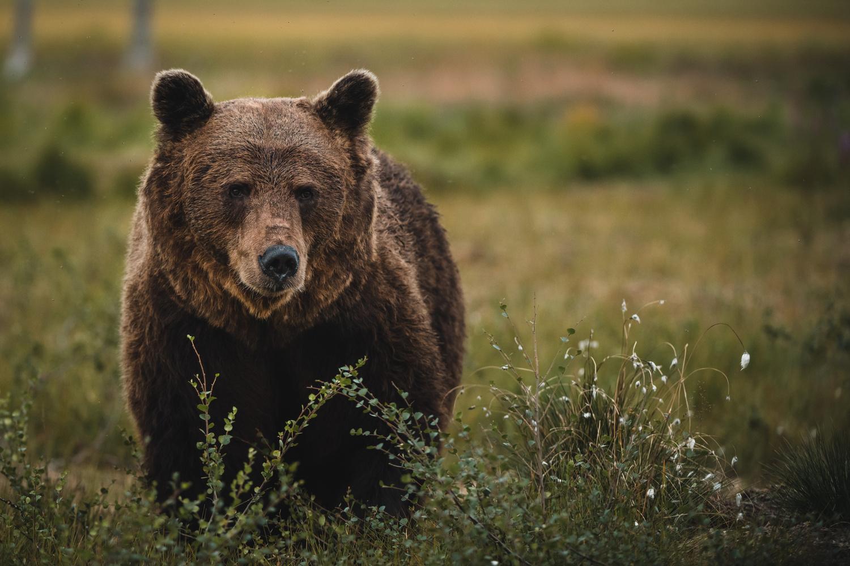 Hello Mr. Bear by Annelin Hoff