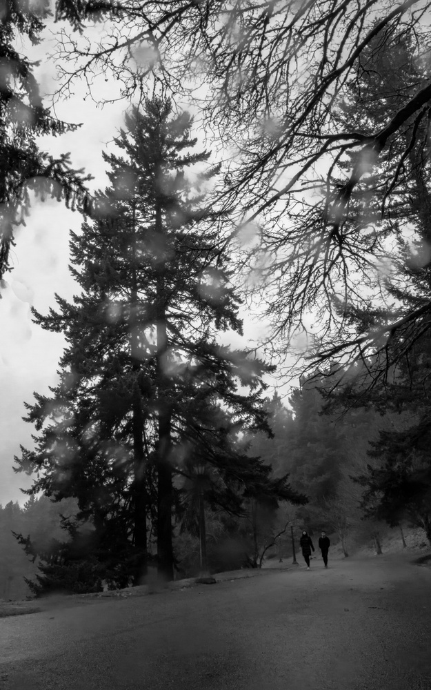 Mt. Tabor park by Cole Herning