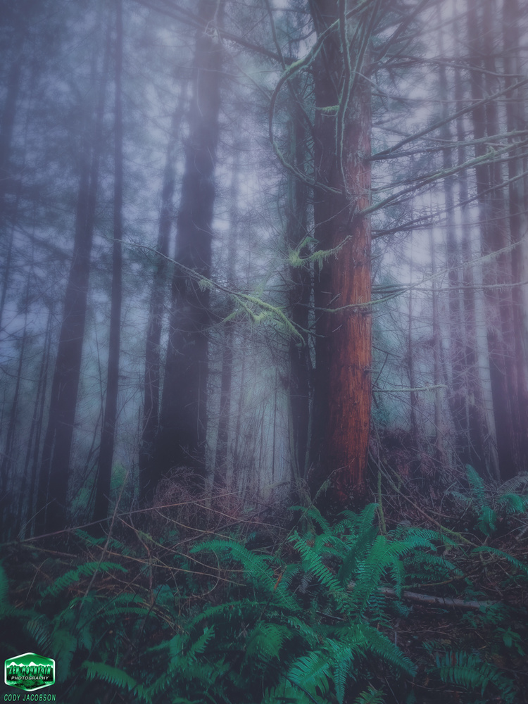 Dramatic Redwood Fog by Cody Jacobson