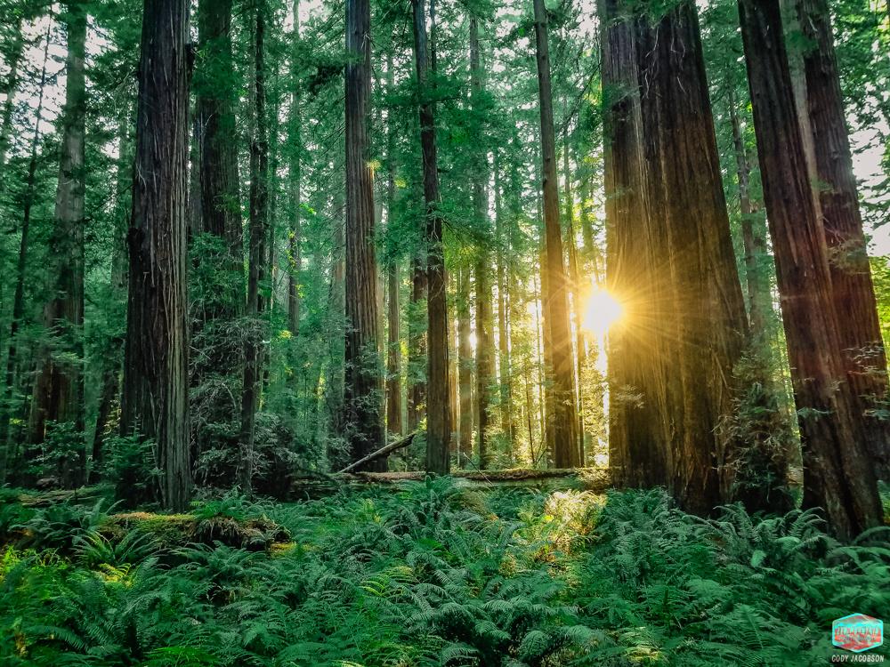 Redwood Sunburst by Cody Jacobson