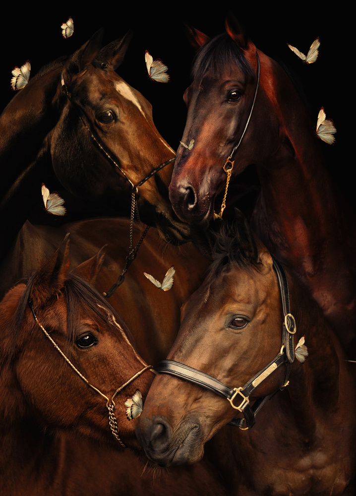 Horses by Ayush Phillip