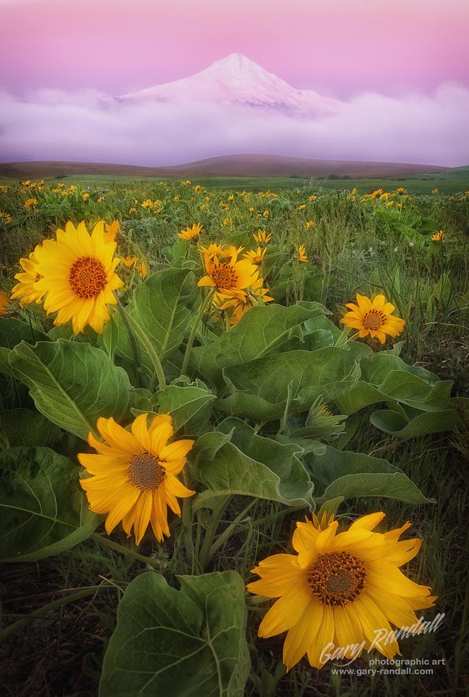 Flowery Field by Gary Randall