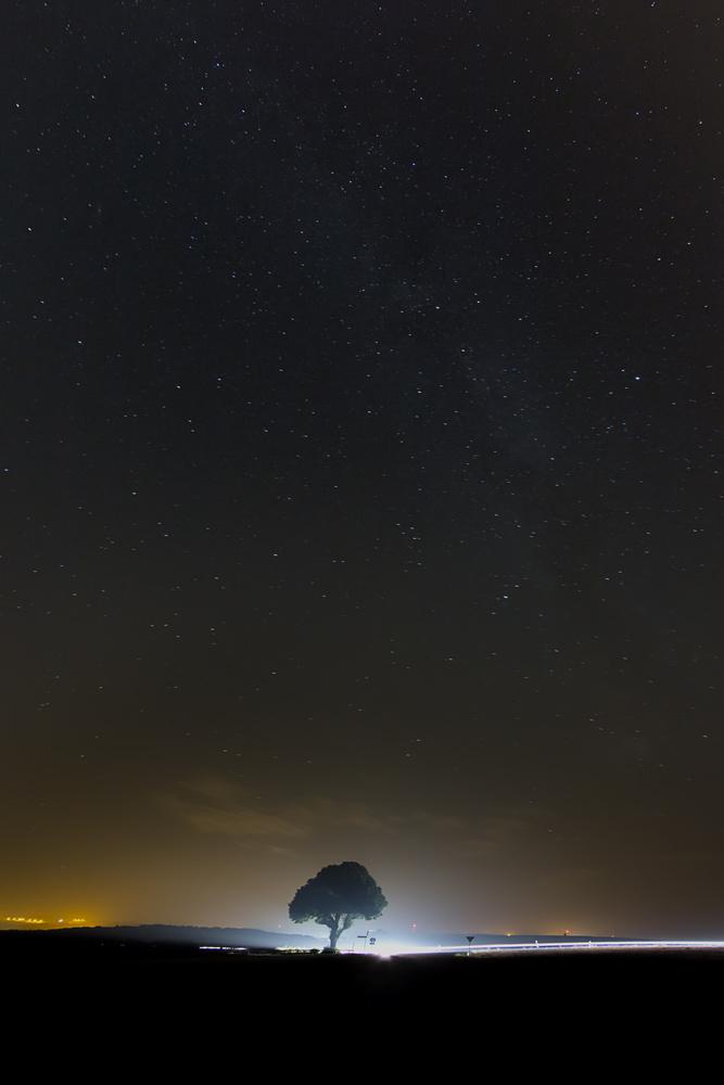 Tree of light by Rúben Pereira