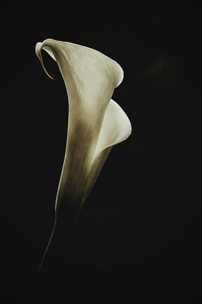 Melina by marina de wit