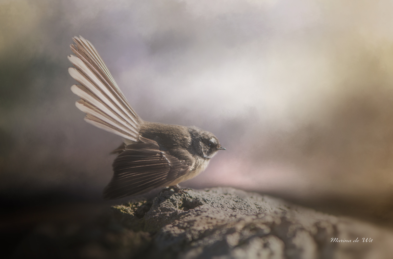 Fantail by marina de wit