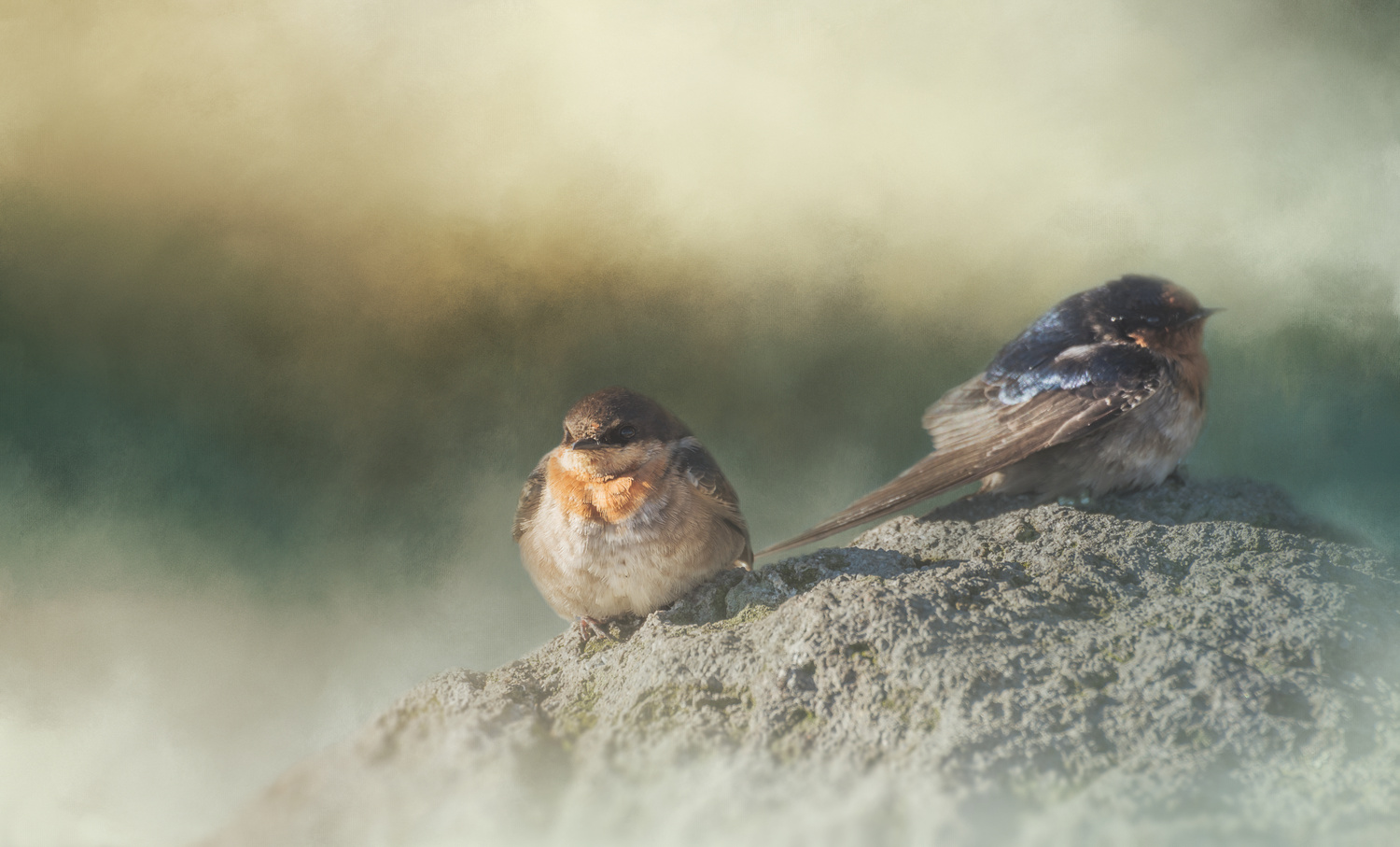 Two Swallows by marina de wit